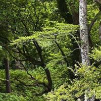 全国人大代表李建安:启动林业生态经济体系建设试点