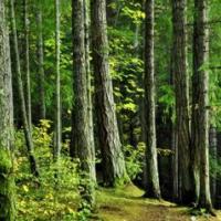 森林公园总体设计规范