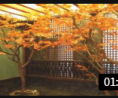 圣缘景观仿真树 上海仿真树企业-仿真桃花树-园林设计有限公司(1) (235播放)