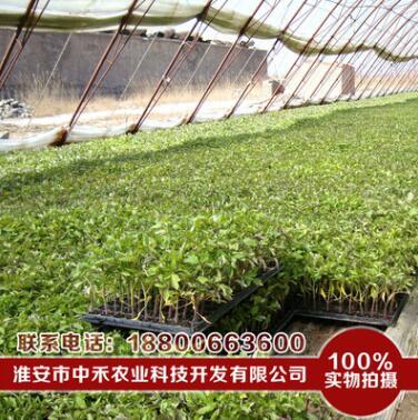 水稻育秧基质 量大从优 水稻基质 育秧基质 水稻育苗基质