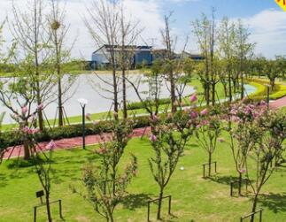 园林绿化庭院设计生态园林规划道路绿化市政工程效果图制作施工