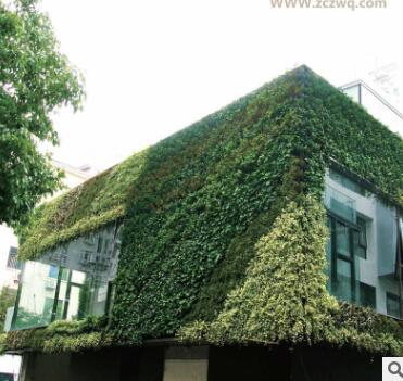 专业生产室内室外立体组合植物墙真植物绿色植物墙植物墙装饰