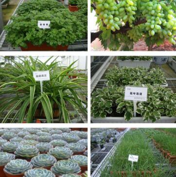 花土种菜土水稻育苗鸡粪花肥有机肥多肉土栽培基质