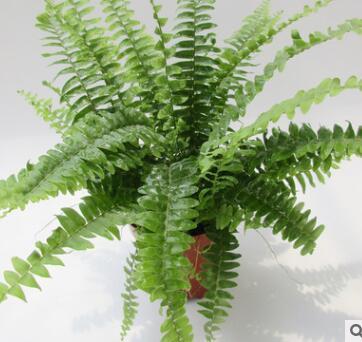 植物小盆栽微景观绿植 工程绿化盆栽 A90