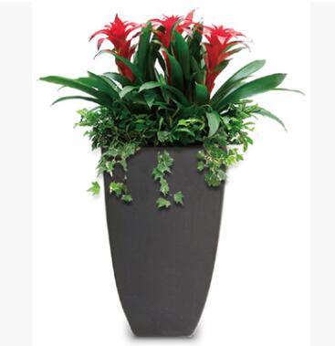 花卉室内盆栽 观叶绿色植物 绿植租摆净化空气
