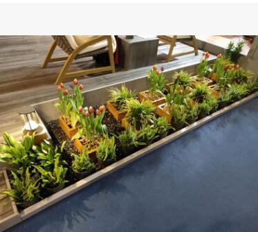 空间美化 园艺设计 多种植物