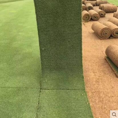 真草坪草皮带泥土四季青耐寒别墅庭院工程绿化带土果岭草皮马尼拉