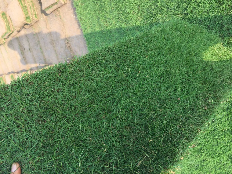 别墅绿化设计,绿化工程施工,草坪供应电15961543375