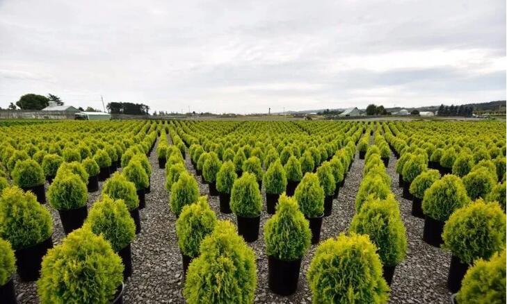 疫情对苗木企业的影响与启示
