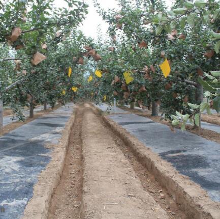 2020年度玉溪中烟种子有限责任公司西双版纳冬繁基地建设工程