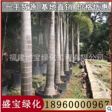 狐尾椰子 杆高3-4-5-6米 价钱450元 福建基地直销