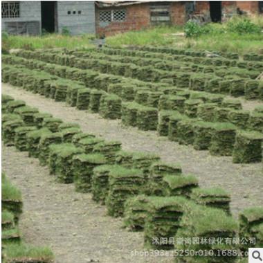 马尼拉草坪 暖季型草坪 固土护坡材料 操场庭院绿化 基地直销
