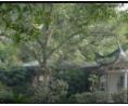 园林植物造景设计 (37播放)