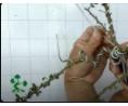 简单的方法, 教你制作盆景造型, 几根铝线就可以, 看到成品我服了 (383播放)