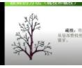 园林苗木栽植前的修剪技术----保证苗木成活的根本 (491播放)