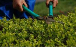2020年岚皋县县城城乡结合部绿化养护二标段竞争性磋商公告