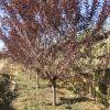 博野县京兴苗木花卉种植有限公司位于河北著名苗木花卉种植基地保定市博野县,地理位置优越,交通便利。主要产品有各种规格绿化乔