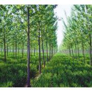 安徽省每文林业有限公司