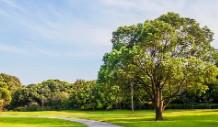 郑州市中原区园林绿化养护中心中原区2021-2022年区管绿地补植补栽项目-更正公告